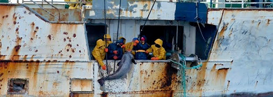 NZ Marist promotes humane and safe practices on foreign fishing vessels